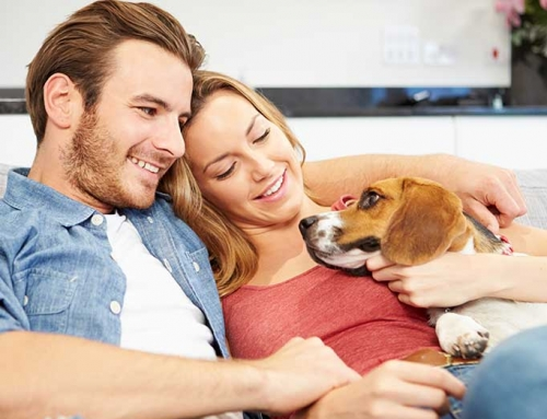 Pets And Relationships – Are your pets ruining yours?